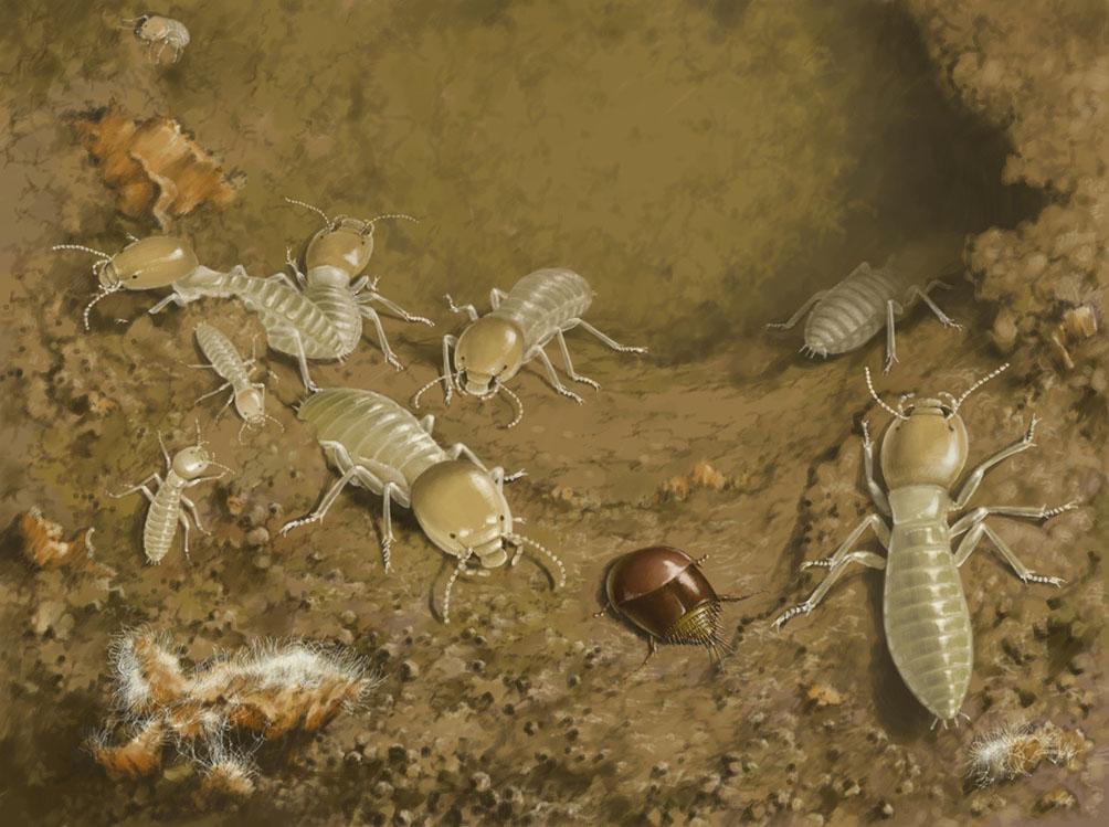 реконструкция жизни термитофила с термитами